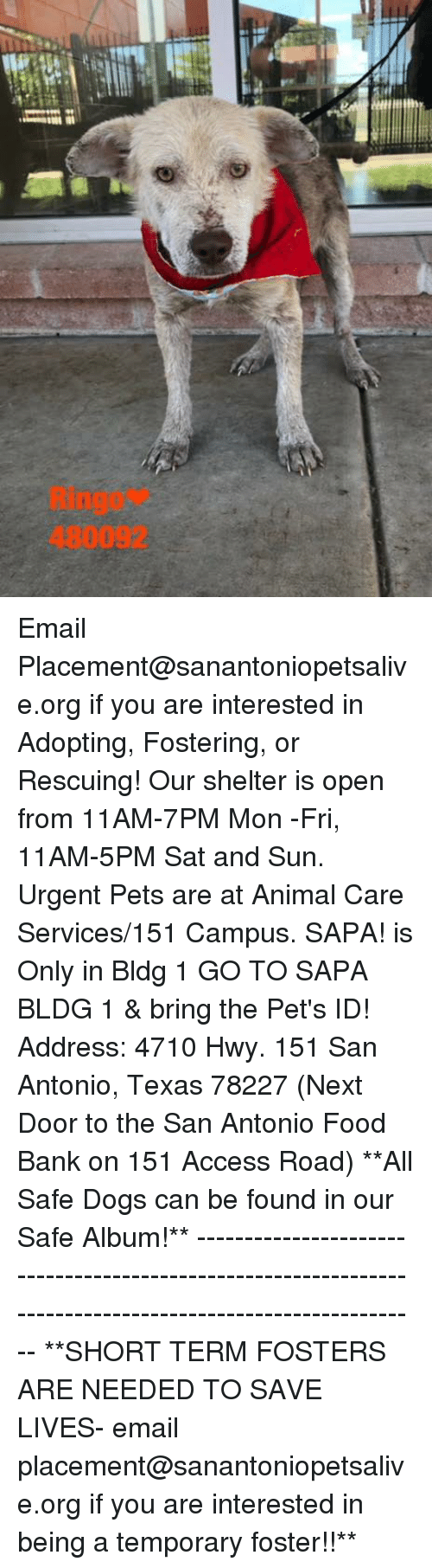 Dogs, Food, and Memes: Ringo*  480092 Email Placement@sanantoniopetsalive.org if you are interested in Adopting, Fostering, or Rescuing!  Our shelter is open from 11AM-7PM Mon -Fri, 11AM-5PM Sat and Sun.  Urgent Pets are at Animal Care Services/151 Campus. SAPA! is Only in Bldg 1 GO TO SAPA BLDG 1 & bring the Pet's ID! Address: 4710 Hwy. 151 San Antonio, Texas 78227 (Next Door to the San Antonio Food Bank on 151 Access Road)  **All Safe Dogs can be found in our Safe Album!** ---------------------------------------------------------------------------------------------------------- **SHORT TERM FOSTERS ARE NEEDED TO SAVE LIVES- email placement@sanantoniopetsalive.org if you are interested in being a temporary foster!!**
