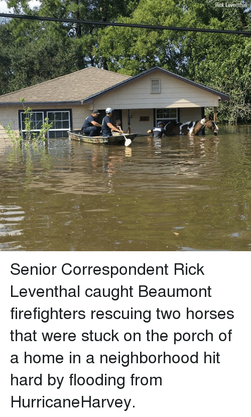 Senioritis: Riok Leventhal Senior Correspondent Rick Leventhal caught Beaumont firefighters rescuing two horses that were stuck on the porch of a home in a neighborhood hit hard by flooding from HurricaneHarvey.