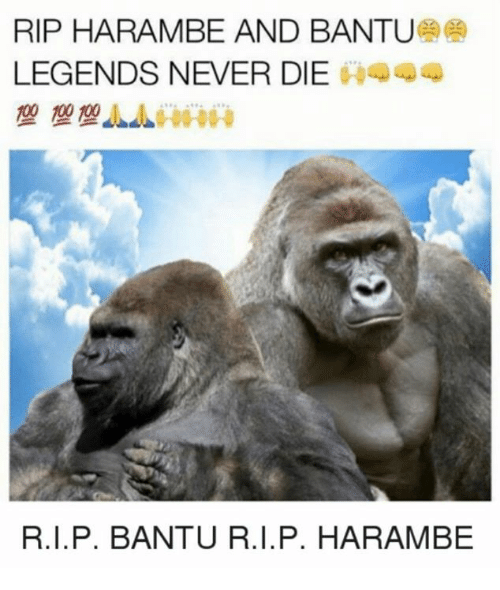 Dank, Legends Never Die, and Never: RIP HARAMBE AND BANTU  LEGENDS NEVER DIE  A444  100 100  R.I.P. BANTU R. I. P. HARAMBE