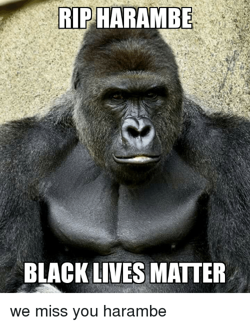 rip-harambe-black-lives-matter-we-miss-y