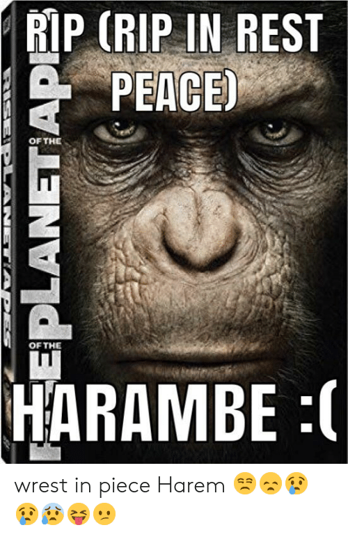 Peace, Harambe, and Rest: | RIP (RIP IN REST  PEACE)  OF THE  OF THE  HARAMBE :  EEPLANETIAP wrest in piece Harem 😒😞😢😢😰😝😕