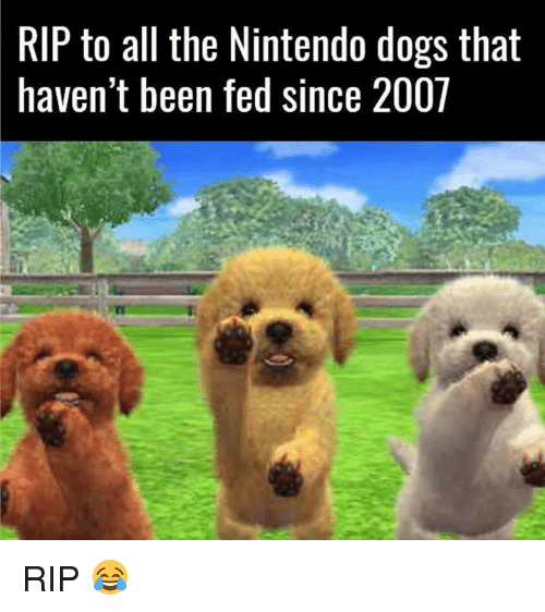 Dank, 🤖, and Rip: RIP to all the Nintendo dogs that  haven't been fed since 2001 RIP 😂