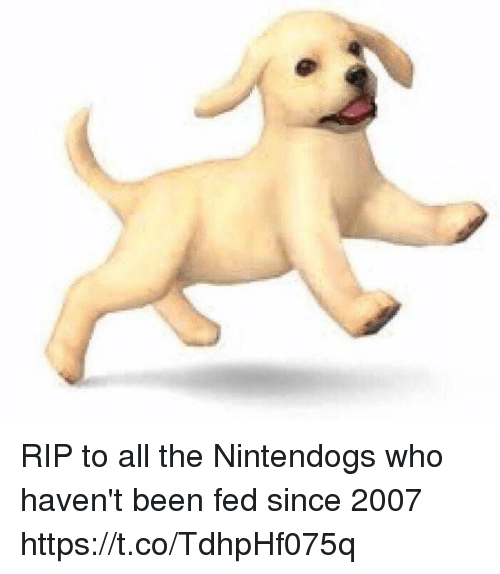 Girl Memes, All The, and Been: RIP to all the Nintendogs who haven't been fed since 2007 https://t.co/TdhpHf075q