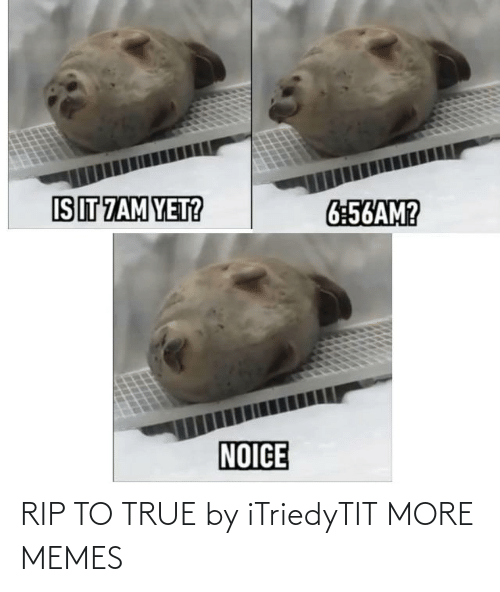 rip: RIP TO TRUE by iTriedyTIT MORE MEMES
