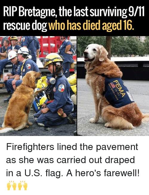 SIZZLE: RIPBretagne, the lastsurviving9/11  rescue dog  who has died aged 16 Firefighters lined the pavement as she was carried out draped in a U.S. flag. A hero's farewell! 🙌🙌