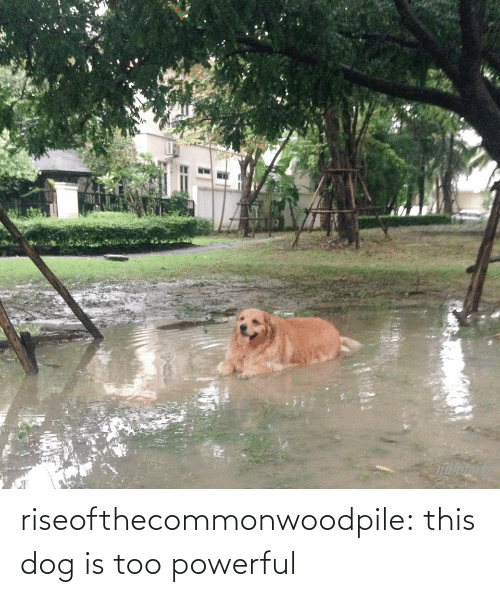 Too Powerful: riseofthecommonwoodpile:  this dog is too powerful