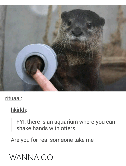Otters: rituaal  hkirkh  FYI, there is an aquarium where you can  shake hands with otters  Are you for real someone take me I WANNA GO