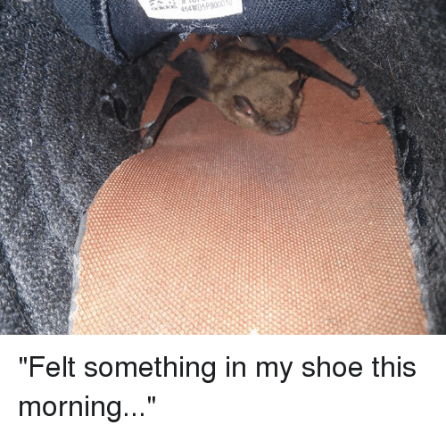 """in-my-shoes: rkkvi  464w050 300  gx """"Felt something in my shoe this morning..."""""""