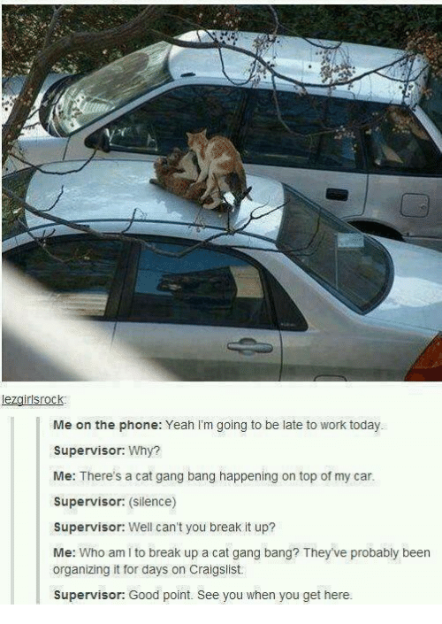 Cat Gang Bang: rlsrock  I Me on the phone: Yeah I'm going to be late to work today.  Supervisor:  Why?  Me: There's a cat gang bang happening on top of my car.  Supervisor: silence)  Supervisor  Well can't you break it up?  Me: Who am l to break up a cat gang bang? They've probably been  organizing it for days on Craigslist.  Supervisor: Good point. See you when you get here