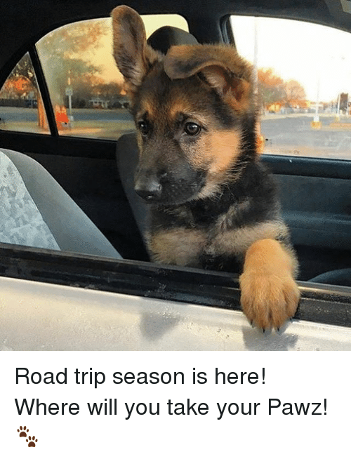 Road Tripping: Road trip season is here! Where will you take your Pawz! 🐾