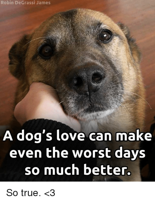 Dogs, Love, and Memes: Robin DeGrassi James  A dog's love can make  even the worst days  so much better. So true. <3