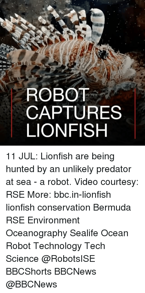 Memes, Bermuda, and Ocean: ROBOT  CAPTURES  LIONFISH 11 JUL: Lionfish are being hunted by an unlikely predator at sea - a robot. Video courtesy: RSE More: bbc.in-lionfish lionfish conservation Bermuda RSE Environment Oceanography Sealife Ocean Robot Technology Tech Science @RobotsISE BBCShorts BBCNews @BBCNews ​​​
