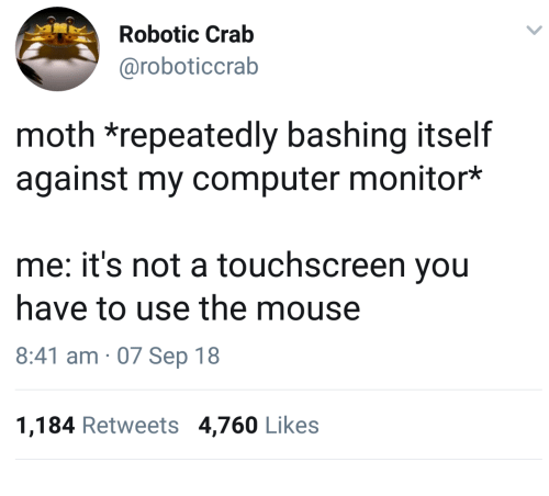Robotic: Robotic Crab  @roboticcrab  moth *repeatedly bashing itself  against my computer monitor*  me: it's not a touchscreen you  have to use the mouse  8:41 am 07 Sep 18  1,184 Retweets 4,760 Likes