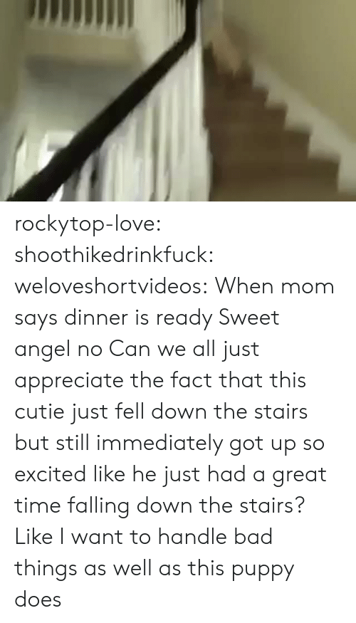 Falling Down The Stairs: rockytop-love:  shoothikedrinkfuck:  weloveshortvideos:  When mom says dinner is ready   Sweet angel no  Can we all just appreciate the fact that this cutie just fell down the stairs but still immediately got up so excited like he just had a great time falling down the stairs? Like I want to handle bad things as well as this puppy does
