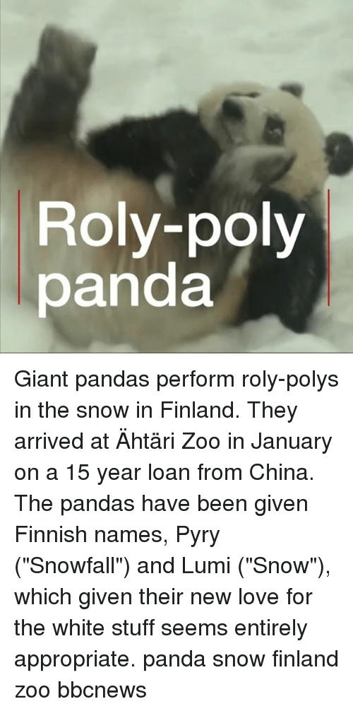 "Love, Memes, and China: Roly-poly  panda Giant pandas perform roly-polys in the snow in Finland. They arrived at Ähtäri Zoo in January on a 15 year loan from China. The pandas have been given Finnish names, Pyry (""Snowfall"") and Lumi (""Snow""), which given their new love for the white stuff seems entirely appropriate. panda snow finland zoo bbcnews"