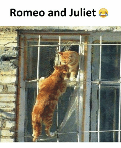 romeo and juliet 18741062 🔥 25 best memes about romeo and juliet romeo and juliet memes,Romeo And Juliet Meme
