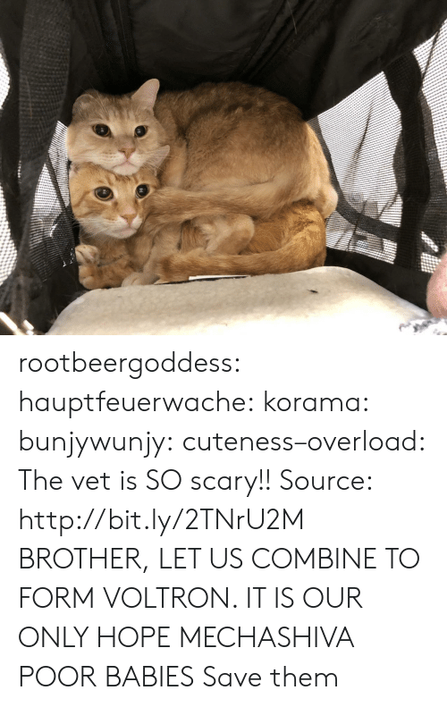 combine: rootbeergoddess: hauptfeuerwache:  korama:   bunjywunjy:  cuteness–overload:   The vet is SO scary!! Source: http://bit.ly/2TNrU2M   BROTHER, LET US COMBINE TO FORM VOLTRON. IT IS OUR ONLY HOPE   MECHASHIVA   POOR BABIES   Save them