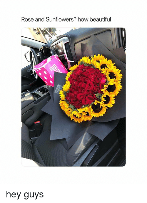 Beautiful, Rose, and Girl Memes: Rose and Sunflowers? how beautiful hey guys