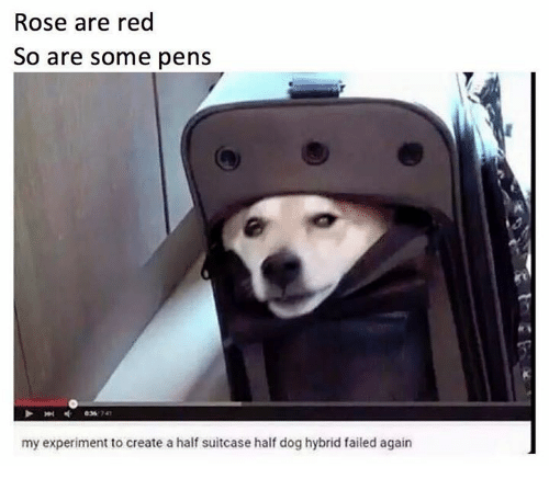 Memes, Rose, and 🤖: Rose are red  So are some pens  my experiment to create a half suitcase half dog hybrid failed again