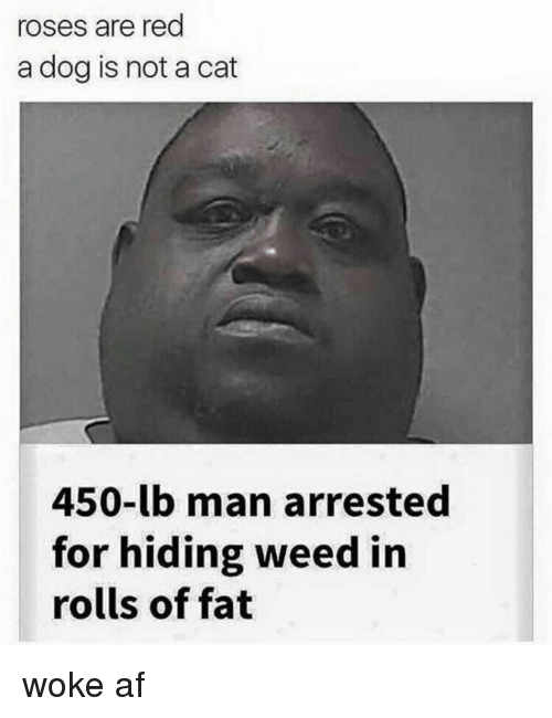 Af, Weed, and Dank Memes: roses are red  a dog is not a cat  450-lb man arrested  for hiding weed in  rolls of fat