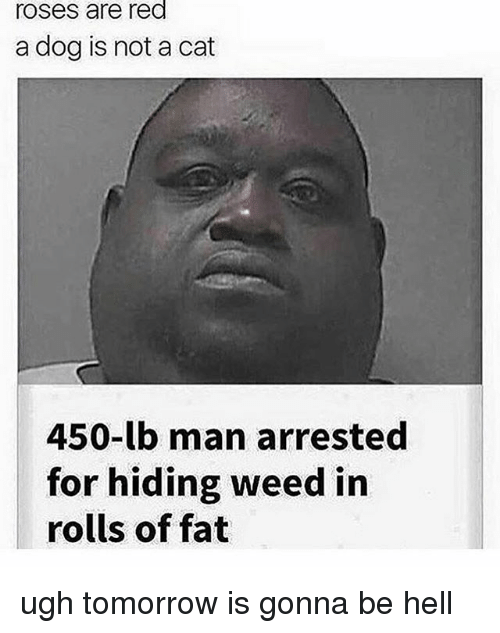 Memes, Weed, and Tomorrow: roses are red  a dog is not a cat  450-lb man arrested  for hiding weed in  rolls of fat ugh tomorrow is gonna be hell