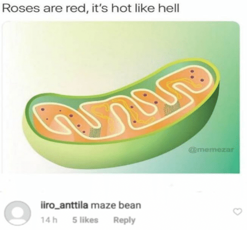 maze: Roses are red, it's hot like hell  @memezar  iiro_anttila maze bean  14h 5likes Reply
