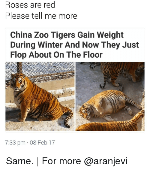 Rose Are Red: Roses are red  Please tell me more  China Zoo Tigers Gain Weight  During Winter And Now They Just  Flop About On The Floor  7:33 pm 08 Feb 17 Same. | For more @aranjevi