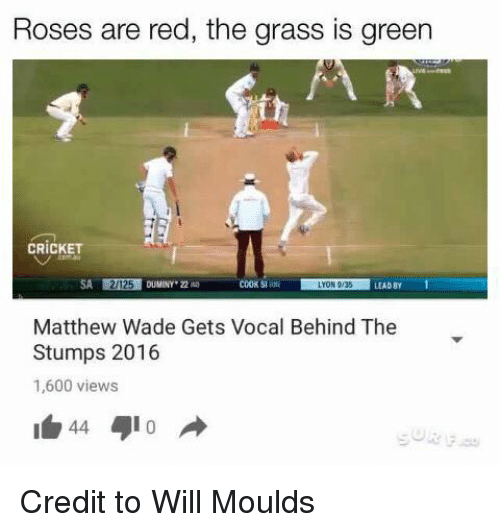 Matthew Wade: Roses are red, the grass is green  CRICKET  SA 2125 DUMINY  COOK 51  LYON 036  LEAD BY  Matthew Wade Gets Vocal Behind The  Stumps 2016  1,600 views  44 Credit to Will Moulds