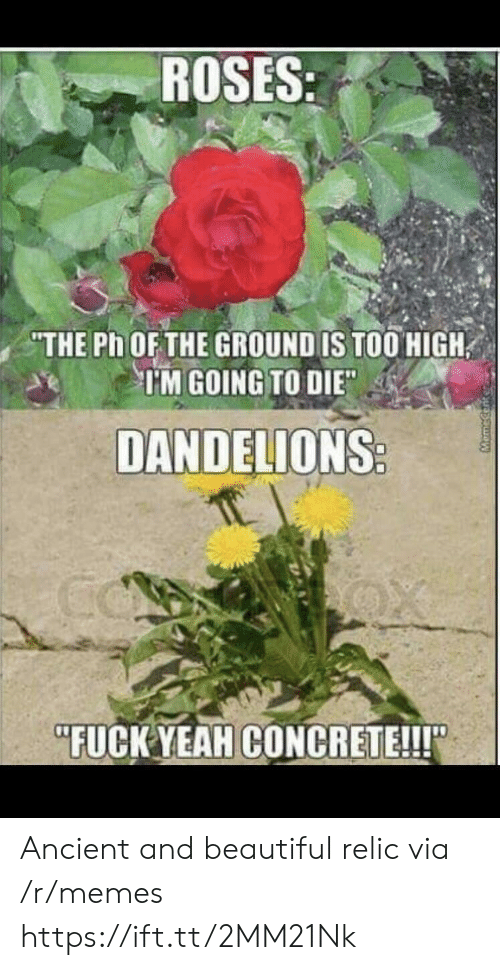 """relic: ROSES  THE Ph OFTHE GROUND IS TOO HIGH  TM GOING TO DIE  DANDELIONS  """"FUCK YEAHCONCRETE!!! Ancient and beautiful relic via /r/memes https://ift.tt/2MM21Nk"""