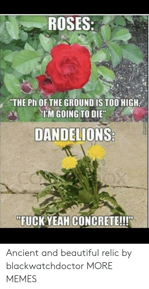 """relic: ROSES  THE Ph OFTHE GROUND IS TOO HIGH  TM GOING TO DIE  DANDELIONS  """"FUCK YEAHCONCRETE!!! Ancient and beautiful relic by blackwatchdoctor MORE MEMES"""