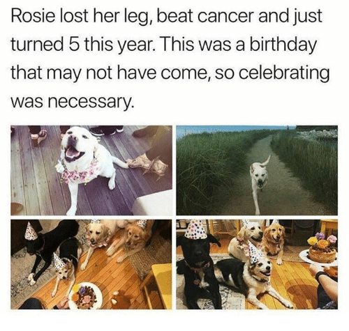 Birthday, Lost, and Rosie: Rosie lost her leg, beat cancer and just  turned 5 this year. This was a birthday  that may not have come, so celebrating  was necessary