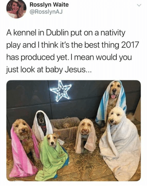Jesus, Memes, and Best: Rosslyn Waite  @RosslynAJ  A kennel in Dublin put on a nativity  play and I think it's the best thing 2017  has produced yet. I mean would you  just look at baby Jesus.