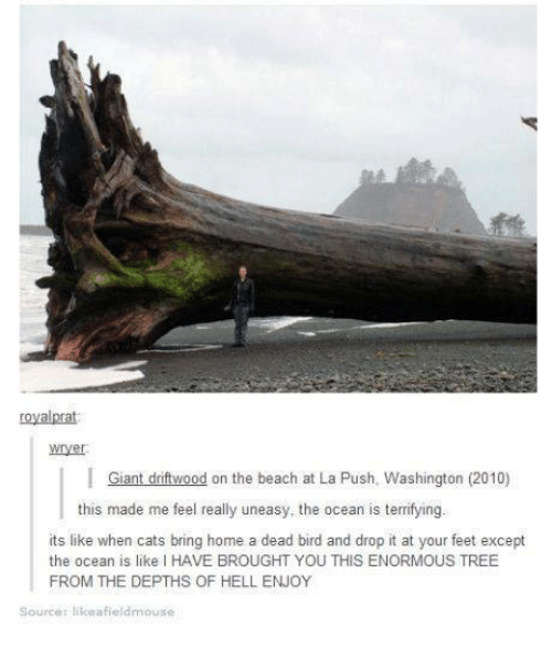driftwood: royal prat  I Giant driftwood on the beach at La Push. Washington (2010)  this made me feel really uneasy, the ocean is terrifying.  its like when cats bring home a dead bird and drop it at your feet except  the ocean is like I HAVE BROUGHT YOU THIS ENORMOUS TREE  FROM THE DEPTHS OF HELL ENJOY  Source: likeafieldmouse