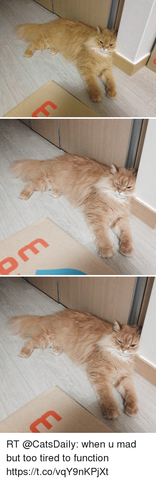 Memes, Mad, and 🤖: RT @CatsDaiIy: when u mad but too tired to function https://t.co/vqY9nKPjXt