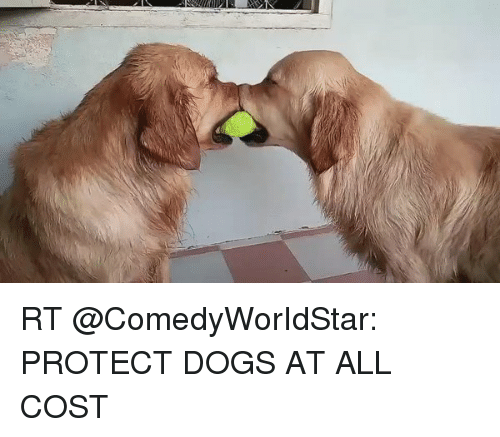 Rt Protect Dogs At All Cost Dogs Meme On Sizzle