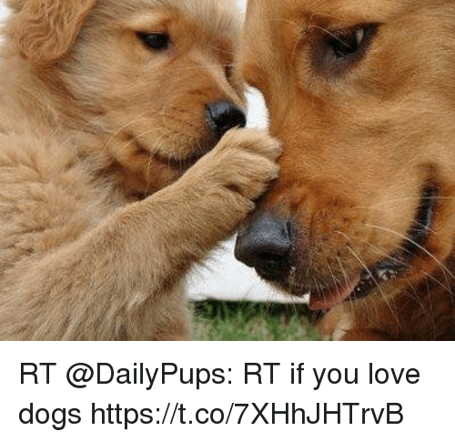 how to know if a dog loves you
