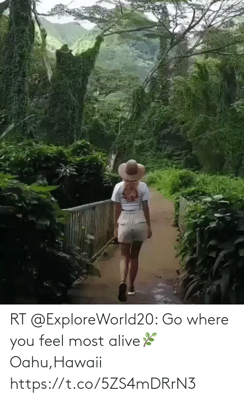 Where: RT @ExploreWorld20: Go where you feel most alive🌿 Oahu,Hawaii https://t.co/5ZS4mDRrN3