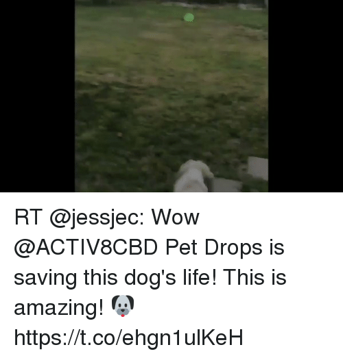 Wow You Re Amazing: RT Wow Pet Drops Is Saving This Dog's Life! This Is
