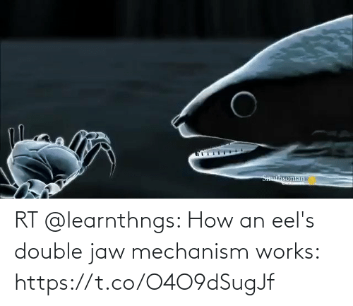 works: RT @learnthngs: How an eel's double jaw mechanism works: https://t.co/O4O9dSugJf