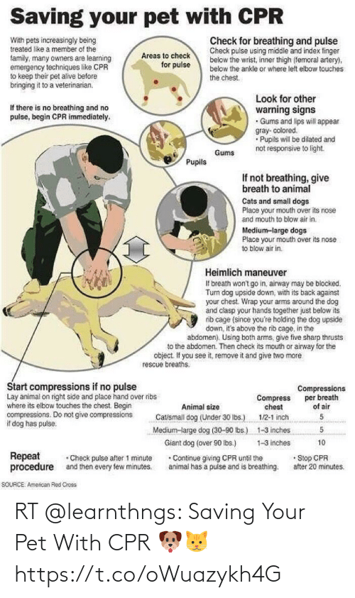 pet: RT @learnthngs: Saving Your Pet With CPR 🐶🐱 https://t.co/oWuazykh4G