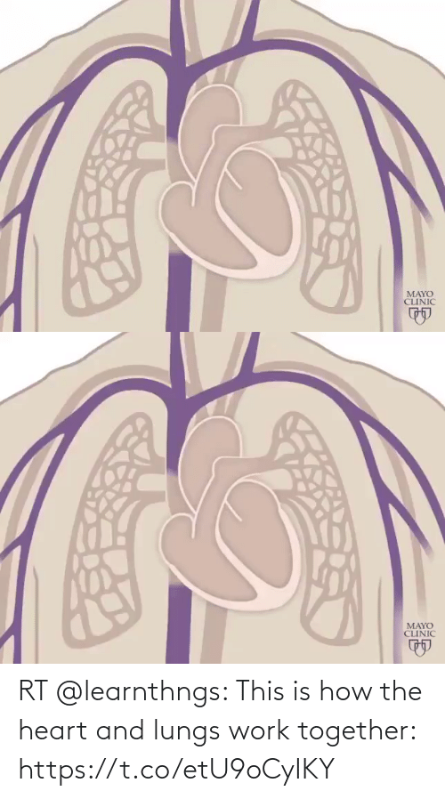 the heart: RT @learnthngs: This is how the heart and lungs work together: https://t.co/etU9oCyIKY
