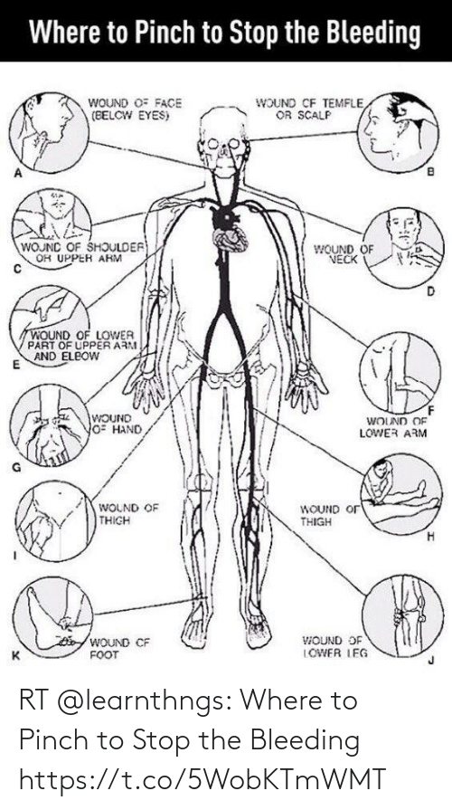 stop: RT @learnthngs: Where to Pinch to Stop the Bleeding 🩸 https://t.co/5WobKTmWMT