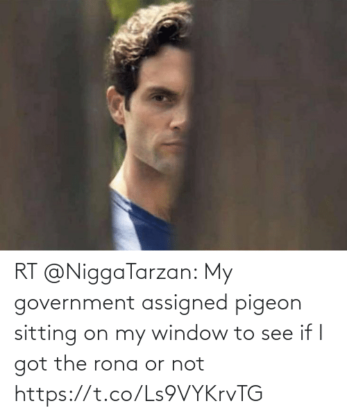 i got: RT @NiggaTarzan: My government assigned pigeon sitting on my window to see if I got the rona or not https://t.co/Ls9VYKrvTG