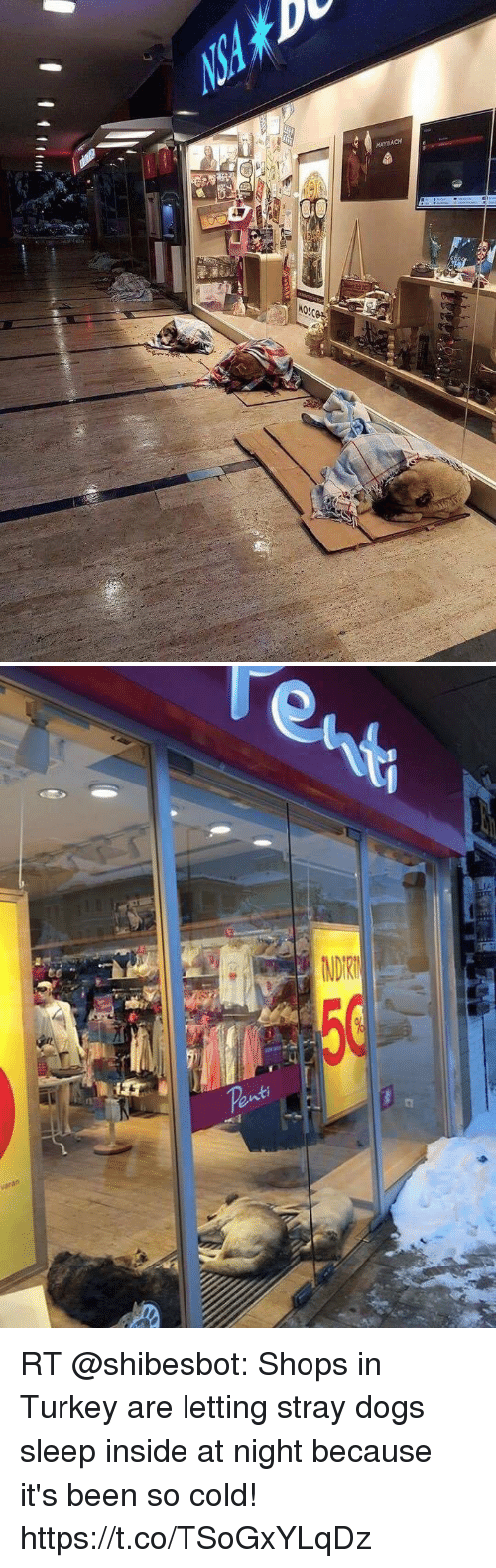 Turkeyism: RT @shibesbot: Shops in Turkey are letting stray dogs sleep inside at night because it's been so cold! https://t.co/TSoGxYLqDz