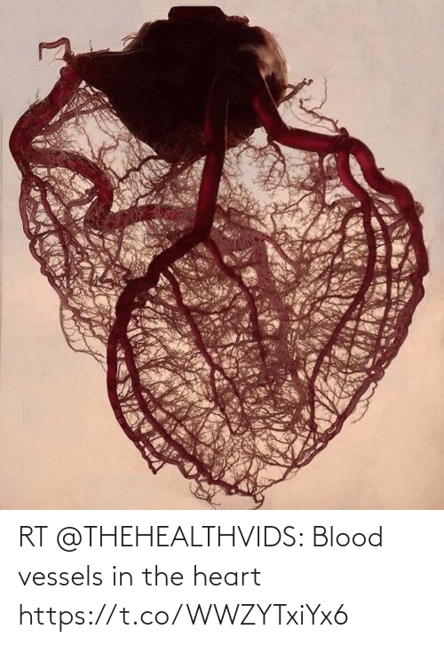 the heart: RT @THEHEALTHVIDS: Blood vessels in the heart https://t.co/WWZYTxiYx6