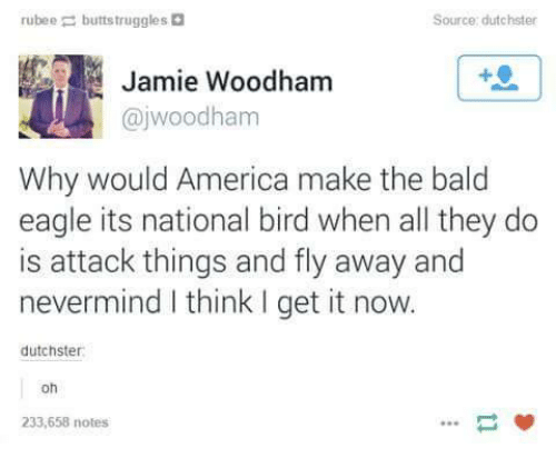 America, Birds, and Eagle: rubee  buttstruggles D  Source: dutchster  Jamie Woodham  ajwoodham  Why would America make the bald  eagle its national bird when all they do  is attack things and fly away and  nevermind think get it now.  dutchster:  oh  233,658 notes
