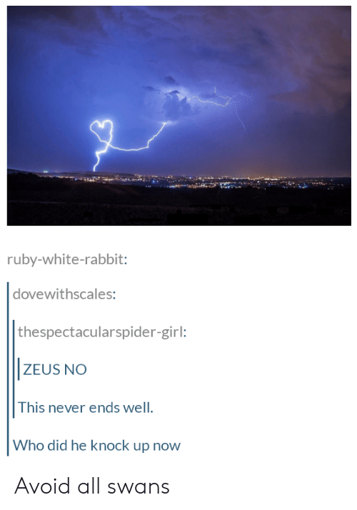 white rabbit: ruby-white-rabbit:  dovewithscales  thespectacularspider-girl:  ZEUS NO  This never ends well  Who did he knock up now Avoid all swans