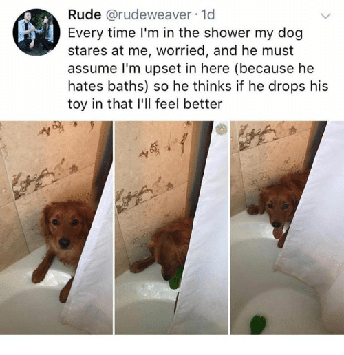 Dank, Rude, and Shower: Rude @rudeweaver 1d  Every time I'm in the shower my dog  stares at me, worried, and he must  assume l'm upset in here (because he  hates baths) so he thinks if he drops his  toy in that I'll feel better  '서
