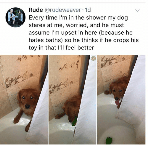 Rude, Shower, and Time: Rude @rudeweaver 1d  Every time l'm in the shower my dog  stares at me, worried, and he must  assume l'm upset in here (because he  hates baths) so he thinks if he drops his  toy in that I'll feel better