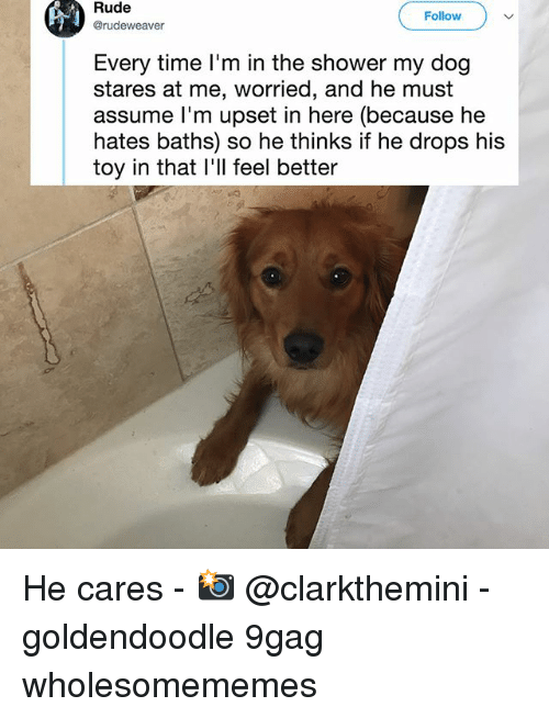 goldendoodle: Rude  @rudeweaver  Follow  Every time I'm in the shower my dog  stares at me, worried, and he must  assume l'm upset in here (because he  hates baths) so he thinks if he drops his  toy in that l'll feel better He cares - 📸 @clarkthemini - goldendoodle 9gag wholesomememes